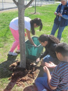 Young people using compost on a tree.